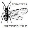 Phasmida Species File Logo